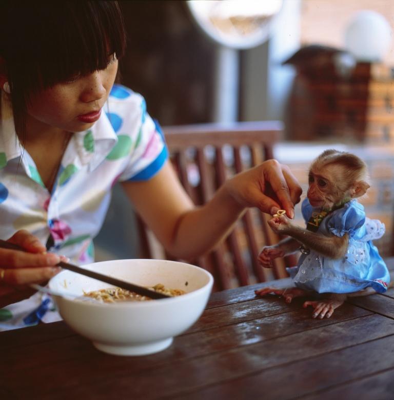 Renting a Monkey